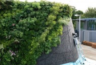 Private Roof Terrace and Greenwall Landscape Design, Lawrence, NY